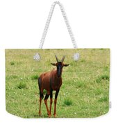 Topi Antelope  Weekender Tote Bag