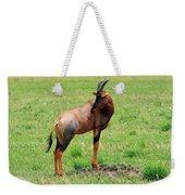 Topi Antelope On The Masai Mara Weekender Tote Bag