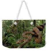 Tree Boa Weekender Tote Bag by Francesco Tomasinelli