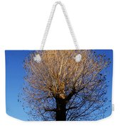 Tree In Afternoon Sunlight Weekender Tote Bag