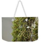 Tree Moss Closeup 2013 Weekender Tote Bag