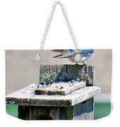Tree Swallows Weekender Tote Bag