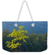 Tree With Yellow Leaves In Acadia National Park Weekender Tote Bag