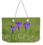 Trio In Violet Weekender Tote Bag