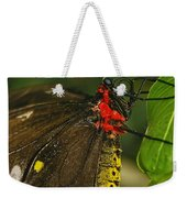 Troides Helena Butterfly  Weekender Tote Bag