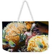 Tropical Wonderland - Banggai Cardinalfish Weekender Tote Bag