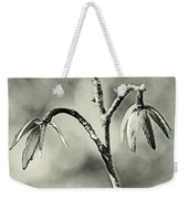 Tulip Poplar Empty Seed Heads - Black And White Weekender Tote Bag