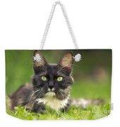 Turkish Angora Cat Weekender Tote Bag