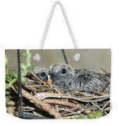 Two Baby Mourning Doves Weekender Tote Bag