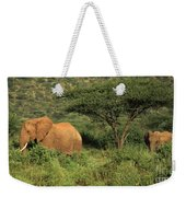 Two Elephants Walking Through The Grass Weekender Tote Bag