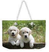 Two Golden Retriever Puppies Weekender Tote Bag