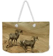 Two Male Rams At Zion Weekender Tote Bag