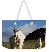 Two Mountain Goats Oreamnos Americanus Weekender Tote Bag
