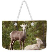 Two Young Stone Sheep Ovis Dalli Stonei Watching Weekender Tote Bag