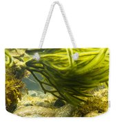 Underwater Shot Of Green Seaweed Attached To Rock Weekender Tote Bag
