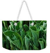 Unfurling Of The Hosta Weekender Tote Bag