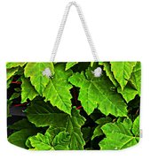 Vibrant Young Maples - Acer Weekender Tote Bag