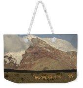 Vicuna Herd Grazing At Mt Chimborazo Weekender Tote Bag