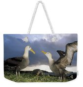 Waved Albatross Courtship Dance Weekender Tote Bag