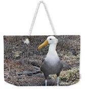 Waved Albatross Diomeda Irrorata Weekender Tote Bag