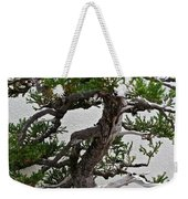 Weathered Bonsai Weekender Tote Bag