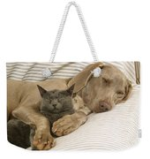 Weimaraner Asleep With Cat Weekender Tote Bag