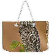 Western Screech Owl Juvenile Utah Weekender Tote Bag