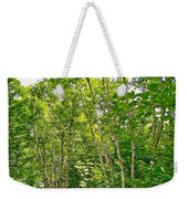 White Birch Along Rivier Du Nord Trail In The Laurentians-qc Weekender Tote Bag