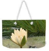 White Lily Near Pond Grass Weekender Tote Bag