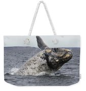 White Southern Right Whale Breaching Weekender Tote Bag