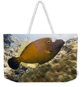 White Spotted Filefish Weekender Tote Bag