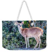 White Tail Deer Bambi In The Wild Weekender Tote Bag