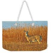 White Tailed Deer In Morning Light Weekender Tote Bag