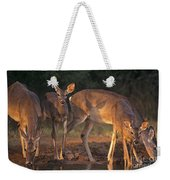 Whitetail Deer At Waterhole Texas Weekender Tote Bag
