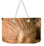 Whole Nutmeg Nuts Weekender Tote Bag