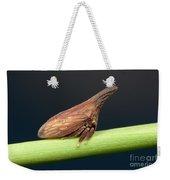 Widefooted Treehopper II Weekender Tote Bag