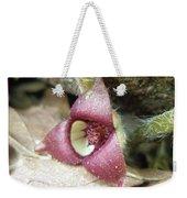 Wild Ginger Flower - Asarum Canadense Weekender Tote Bag