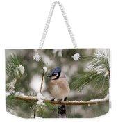 Winter Blue Jay Weekender Tote Bag