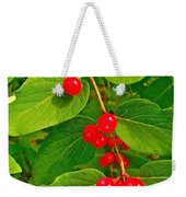 Winterberry Along Rivier Du Nord Trail In The Laurentians-qc Weekender Tote Bag