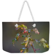 Winter's Oak Sapling Weekender Tote Bag