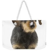 Wire-haired Dachshund Weekender Tote Bag