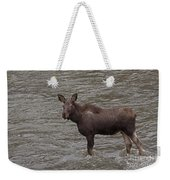 Yearling Moose In The Shoshone River   #1284 Weekender Tote Bag