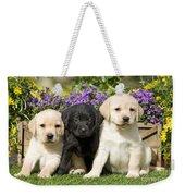 Yellow And Black Labrador Puppies Weekender Tote Bag