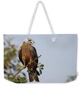 Yellow-billed Kite  Milvus Aegyptius Weekender Tote Bag