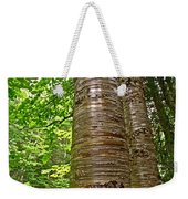 Yellow Birch Near La Chute In Forillon Np-qc Weekender Tote Bag
