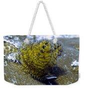 Yellow Christmas Tree Worm Weekender Tote Bag