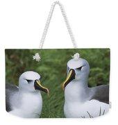 Yellow-nosed Albatross Pair Gough Island Weekender Tote Bag