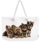 Yorkshire Terriers Weekender Tote Bag