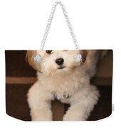 Yoshi Is One Today - Havanese Puppy Weekender Tote Bag