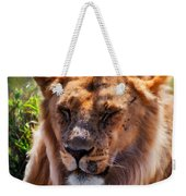 Young Adult Male Lion Portrait. Safari In Serengeti Weekender Tote Bag